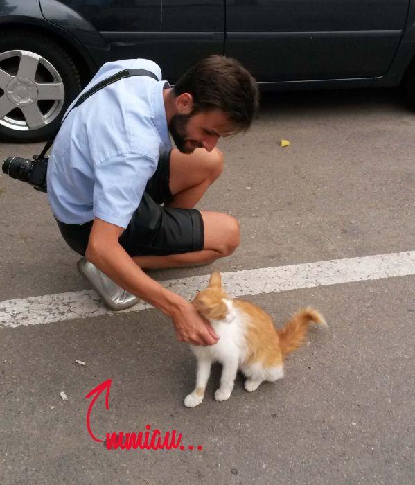 pisica-miau